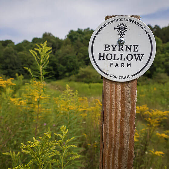 Hike Our Bog Trail image - News & Events